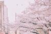 抖音樱花雨怎么拍 抖音吹出樱花雨拍摄方法